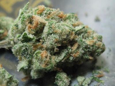 Apollo 11 Marijuana Strain