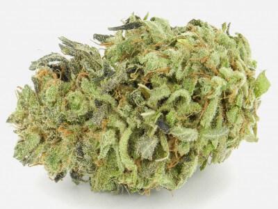 Buy Durban Poison Marijuana Strain
