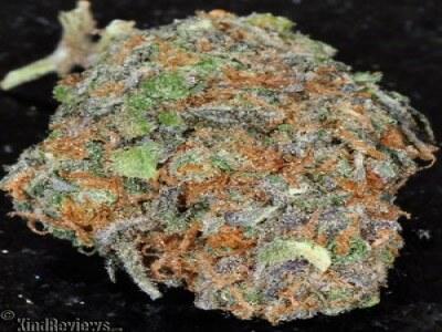 Bordello Kush Marijuana Strain